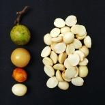 Semillas de mamoncillo